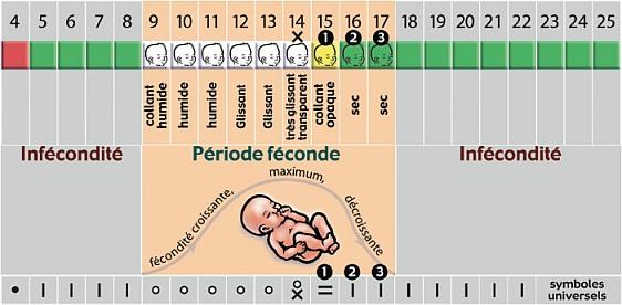 cycle_feminin.jpg
